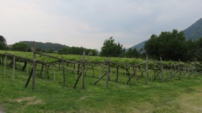 Vignobles de la vallée d'Aoste