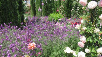 Fleurs des jardins de l'Alhambra - Grenade