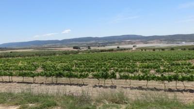 Des champs d'arbres fruitiers