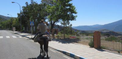 paysan sur son petit cheval Sur la route des Alpujarras entre Grenade et Almeria
