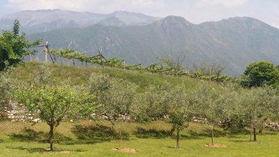 Les arbres fruitiers et la vigne de Monte Isola