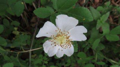 Les fleurs du Parc National de Plitvice (Croatie)