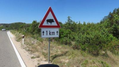 Attention sangliers ! (Croatie)