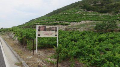 Des vignobles partout - Presqu'île de Peljesac