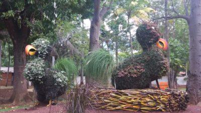 Au jardin de l'Etat à St Denis (Réunion)