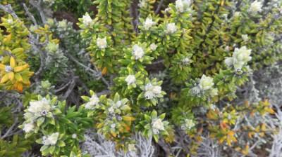Végétation du Morne Langevin