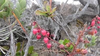 Fleurs sauvages du Morne Langevin