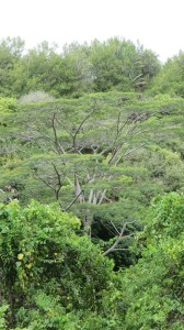 Végétation de la Réunion
