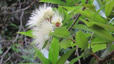 Plantes tropicales - Réunion