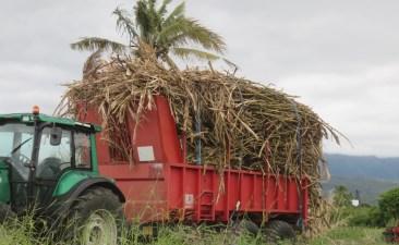 Ramassage de la canne à sucre - Réunion