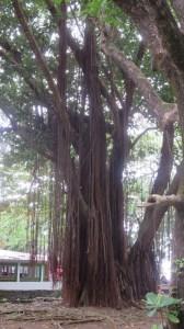 Dans l'Anse des cascades - Réunion