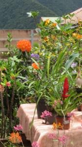 Fleurs au marché du curcuma - Plaine des Grègues (Réunion)
