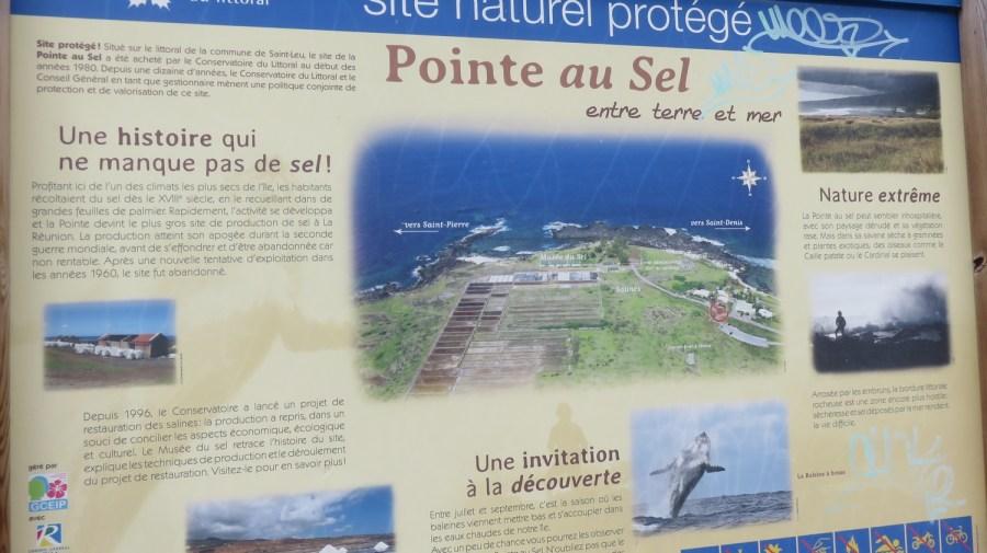 la Pointe au sel - Réunion