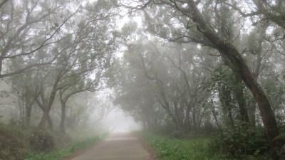 La route forestière du Tévelave - Réunion