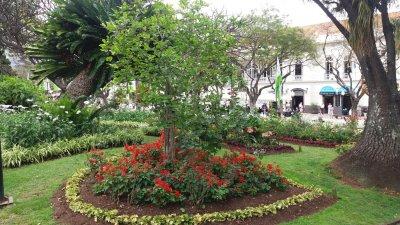 Les jardins de Funchal - Madère