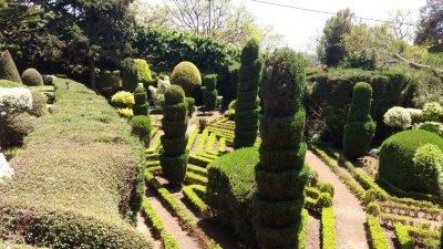 Le jardin des topiaires du jardin botanique de Funchal - Madère