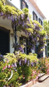 Fleurs et plantes du jardin botanique de Funchal - Madère