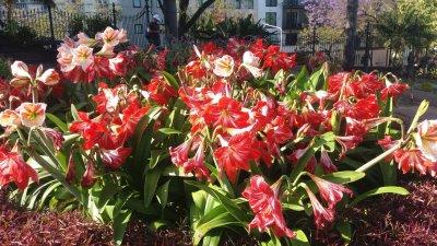 Fleurs du parc Ste Catherine de Funchal - Madère