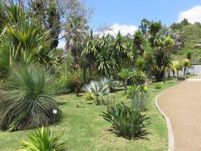 La végétation du jardin botanique de Funchal - Madère