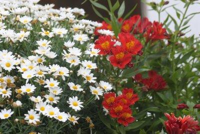 Parterre de fleurs à Ponta Delgada - Madère