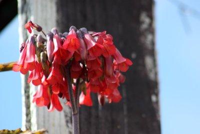 Flore de Madère