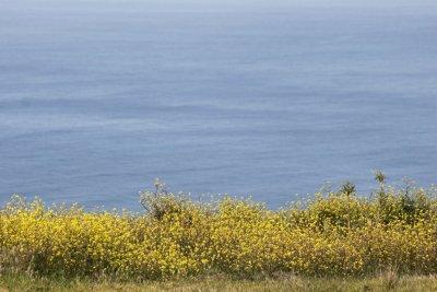 Flore au phare de Ponta Do Pargo - Madère