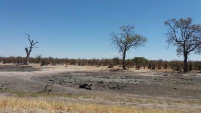 Paysage de la région de Savuiti - Botswana