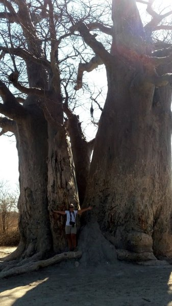 Baobab - Nxai Pan NP (Botswana)