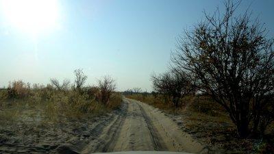 Sur la piste dans la Réserve de Moremi (Botswana)