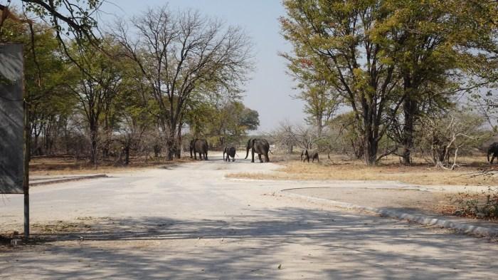 Eléphants à la South Gate de la Réserve de Moremi (Botswana)