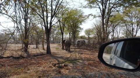 Eléphants dans la Réserve de Moremi (Botswana)