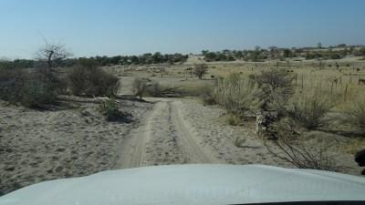 Descente dans le lit de la rivière Boteti - Makgadikgadi NP (Botswana)