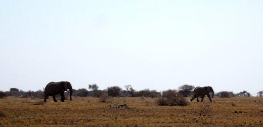 Eléphants - Nxai Pan NP (Botswana)
