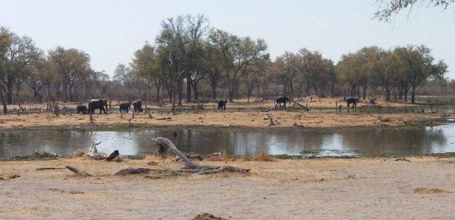 Eléphants dans la rivière Khway - Botswana