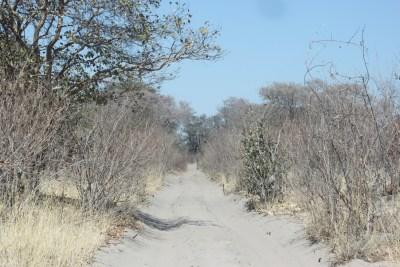 La piste vers Savuti - Botswana