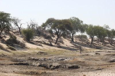 Dans la Rivière Boteti - Makgadikgadi NP (Botswana)