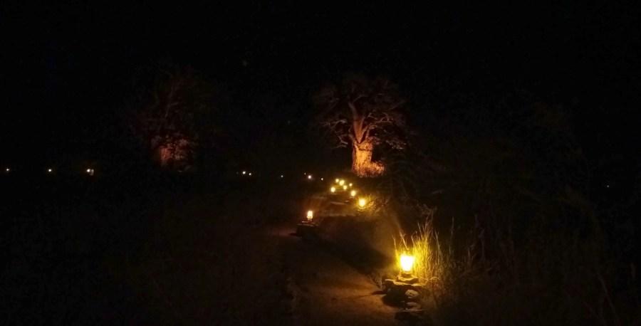 Baobab au campsite Planet Baobab - Botswana