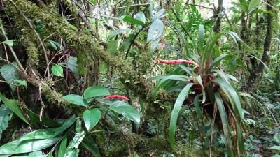 Dans la réserve Bosque Nuboso de Santa Elena - Costa Rica
