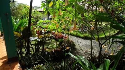 Des fleurs au B&B Buena Suerte de Cahuita - Costa Rica