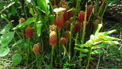 Végétation du parc de Cahuita - Costa Rica