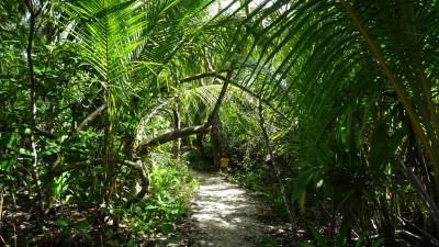 Dans le parc de Cahuita - Costa Rica
