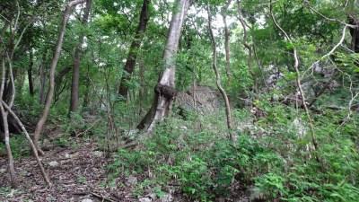 La forêt tropicale du parc de Palo Verde (Costa Rica))
