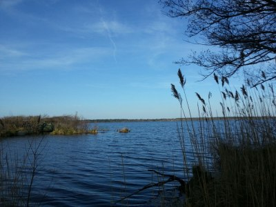 L'étang de Léon