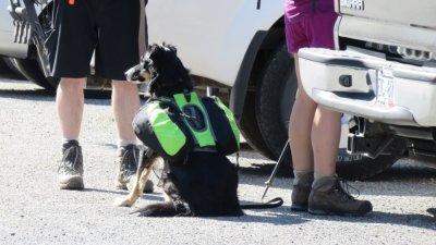 Un chien randonneur - Le parc National Yoho - Rocheuses canadiennes