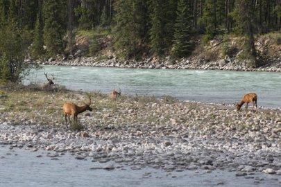 Wapiti Campground - Jasper (Canada)
