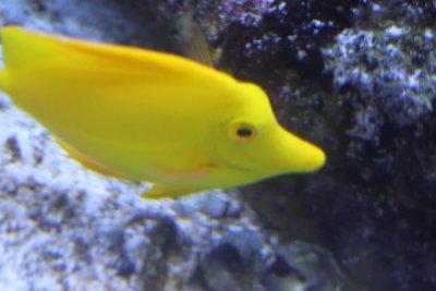 L'aquarium de Québec