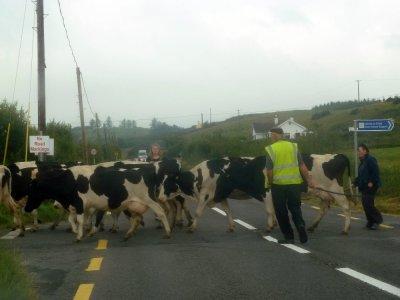 Sur la route entre Limerick et Ennis - Irlande