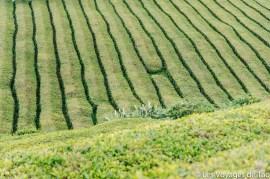 Les voyages de Tao Sao Miguel Açores-21