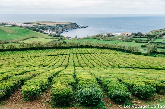 Les voyages de Tao Sao Miguel Açores-63