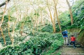 Les voyages de Tao Sao Miguel Açores-86
